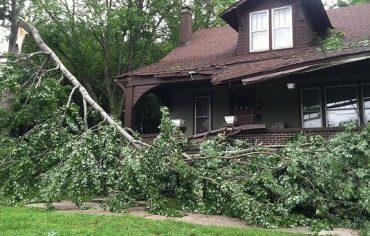 fallen-tree-house2