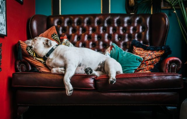 broken-resolutions-lazy-dog-on-couch
