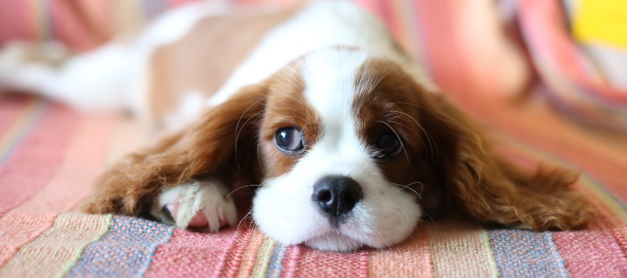 Does-home-insurance-cover-dog-bites-sad-puppy